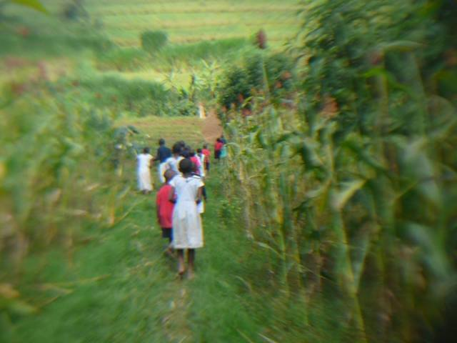 kisoro_july_field_maize